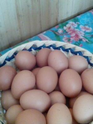 кто поставляет яйцо в рубцовске порно